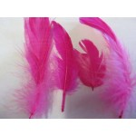Poultry Feather